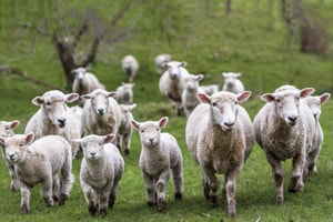 Livestock Noise Monitoring